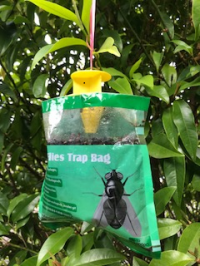 Flying Insect Traps - D2K