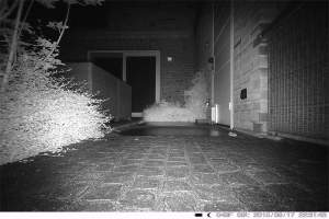 Pest Cam Night Vision View