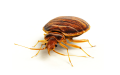 Bed Bug Treatment & Removal